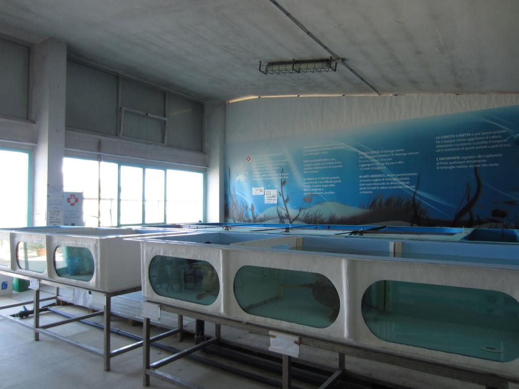 La fondazione cetacea parte del ceas polo adriatico for Vasche x tartarughe